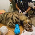 טיפול ביונקים